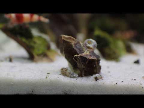 Patay na tubig laban sa parasites