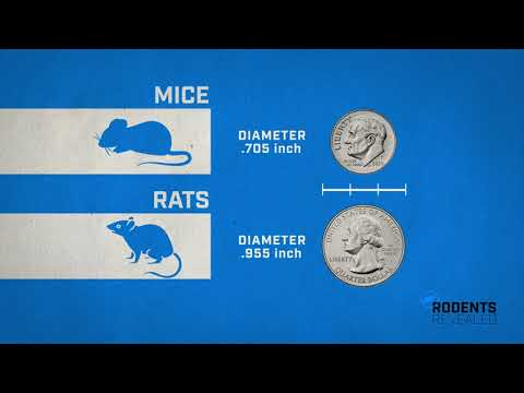 How Rodents Get Inside