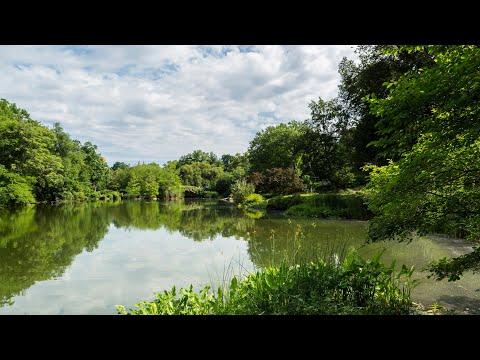 #MondayMeditation: The Pond