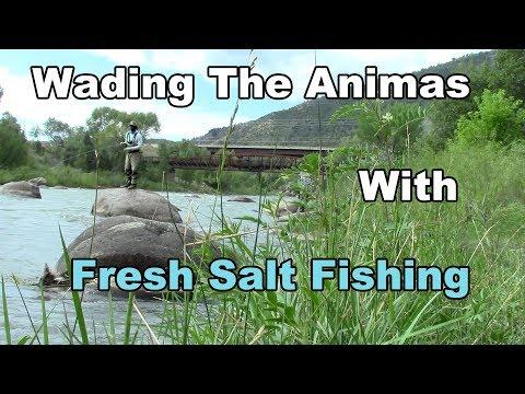 Animas River Wading