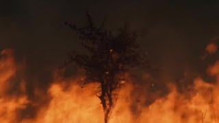 Devastating Wildfires on the Savannah | The Great Rift: Africa's Wild Heart | BBC Earth