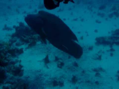 St. Johns, St. John´s Reef,Ägypten