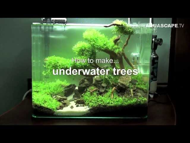 Aquascaping - How to make trees in planted aquarium