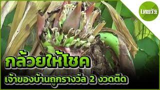 กล้วยแปลกให้โชค เจ้าของบ้านถูกรางวัล | 10-06-62 | ข่าวเช้าตรู่ไทยรัฐ