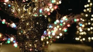 Christmas Decor by Pro-Tree
