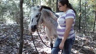 Nelson and Nika 10-12-2015   Dogwood Lane Horse Sanctuary