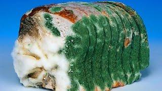 Хлеб как оружие против России. Заговор против нации