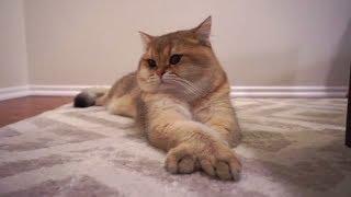 Приколы с Котами и Собаками Смешные коты и собаки 2018 Смешные Животные Калейдоскоп за 12 10 2018