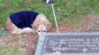 Loyal dog refuses to leave owner's grave
