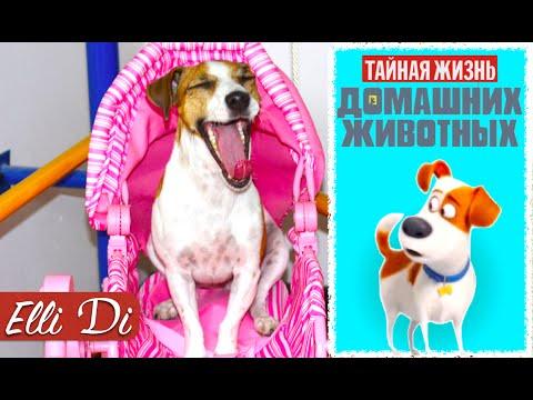 ТАЙНАЯ ЖИЗНЬ ДОМАШНИХ ЖИВОТНЫХ | ГОВОРЯЩАЯ СОБАКА ДЖИНА | Elli Di Собаки