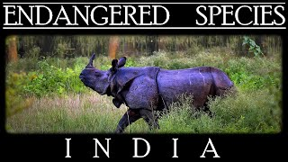 Endangered Species in India