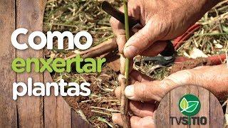 COMO ENXERTAR VIDEIRAS E DEMAIS PLANTAS