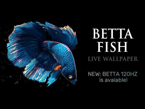 Betta Fish Live Wallpaper Free 12 Android Descargar Gratis