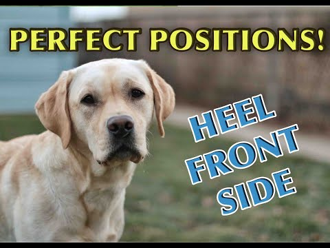 How To Train POSITIONS Perfectly! (Dog Training Hack!)