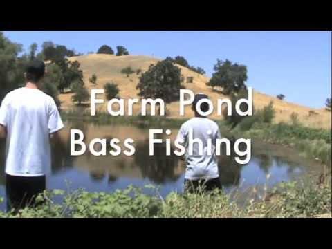Farm Pond Bass Fishing