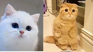 Spécial Tik-Tok chaton#Meilleures Vidéos Drôles de Chat et de Chien 🐶🐱- Best Funny DOGS et CATS #131