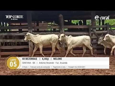 40 BEZERRAS NELORE