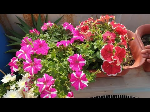 Today's Blooms in My Garden || Fun Gardening
