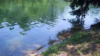 Щучий пруд в кузьминках рыбалка