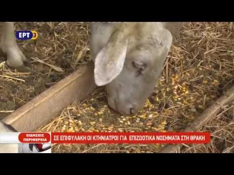 Σε επιφυλακή οι κτηνίατροι για επιζωοτικά νοσήματα στη Θράκη | 17/10/2018 | ΕΡΤ