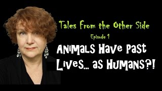 """""""ANIMALS HAVE PAST LIVES AS HUMANS?!"""" Episode 1: Tales From the Other Side"""