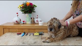 SIMPLE WAY TO GROOM A TERRIER