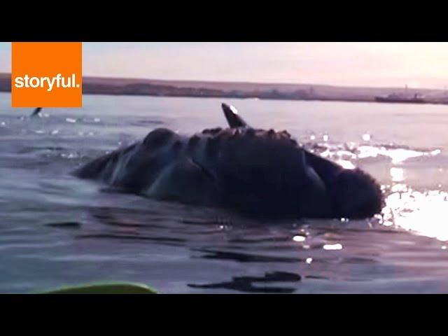 حوت يداعب مغامرين و يرفع قاربهم عن سطح الماء