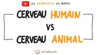 Vignette de [VIDÉO] CERVEAU HUMAIN ET ANIMAL - Les neurosciences en dessins