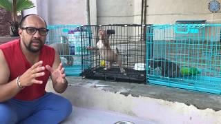 Dog Farm | Kennel | What Food | Diet Plan | Should I Give To Little Puppy? Harwinder Singh Grewal