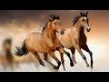 Le cheval au galop- Bon mois de Juillet - Gros bisous de Pierre Paul
