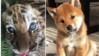 Life with BABY ANIMALS is FULL OF LAUGH Ha-Ha Pets Video 2020