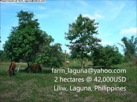 LAGUNA FARM With Income For SALE 2 Hectares At 42,000USD Or PAWN 28,000USD Mp3