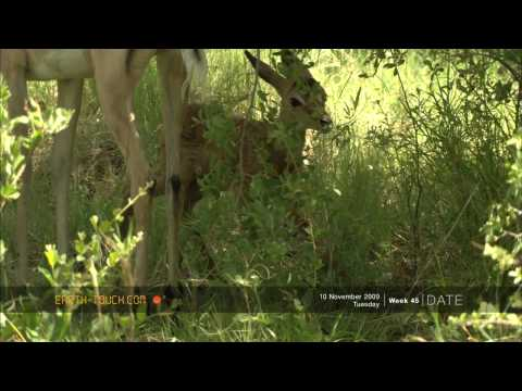 أفلام الطبيعة HD …الولادة في البرية