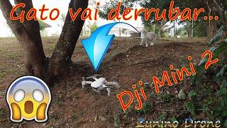 Voando baixo dentro da Floresta. Vôo exploratório em FPV com Drone Dji Mini 2 dentro da mata