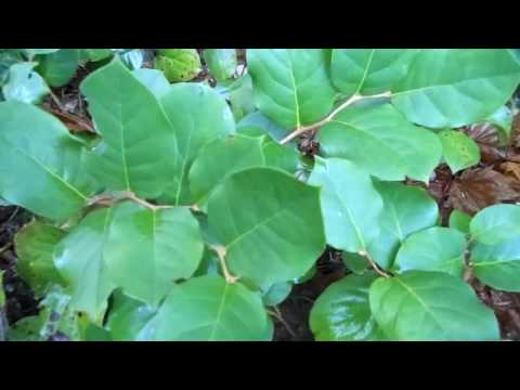 mp4 Natural Landscaping Pacific Northwest, download Natural Landscaping Pacific Northwest video klip Natural Landscaping Pacific Northwest