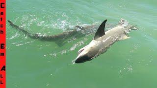 JAWS vs LITTLE SHARK! **Stuck in 2 FEET of WATER**