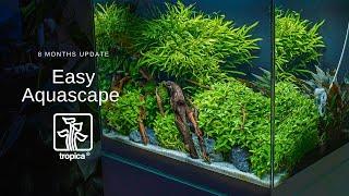 Inspiracja Tropica z prostymi roślinami