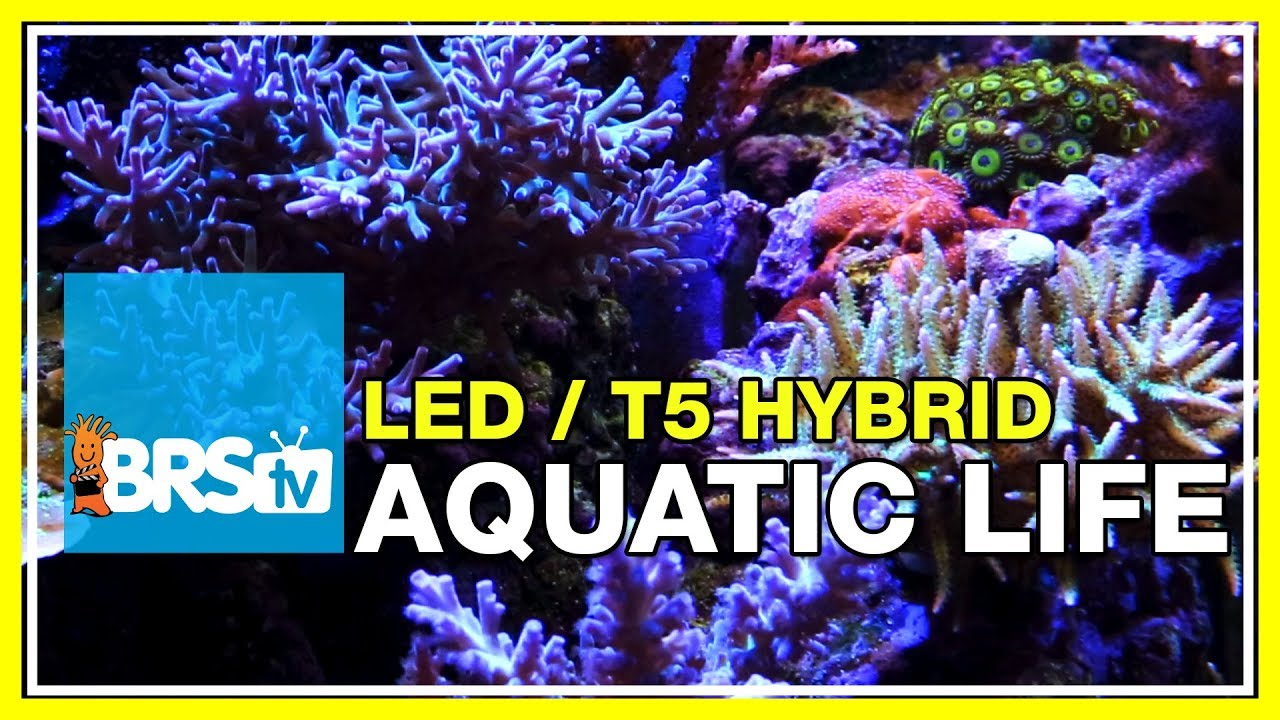 A deeper look into the Aquatic Life T5/LED Hybrid fixture | BRStv Investigates