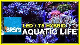 BRStv Investigates: Diving into the Aquatic Life T5/LED Hybrid fixture