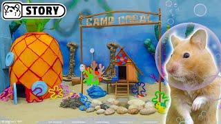 Syrian Hamsters In Spongebob Underwater World 🔵 Come And Enjoy - Homura Ham