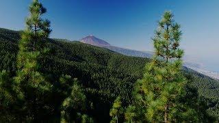 Viaje a Tenerife por el aire: Descubre nuestra isla