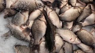 Рыбалка на озере таволжаны курганская область