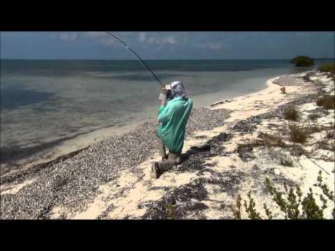 Fluefiskeri ved Cuba efter lemon shark, snook, tarpon og bonefish