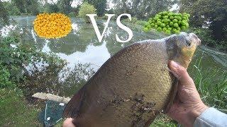 Какая рыба клюет на консервированную кукурузу