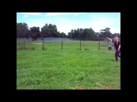 Our Farm Animals :D