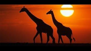 Африканская этническая музыка, чтобы уйти от реальности, фоновая музыка