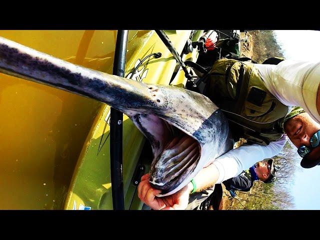 Kayak Fishing: HUGE Prehistoric Paddlefish