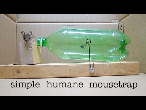 Make A No-Kill Mouse Trap With A Soft Drink Bottle