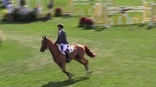 VIDEO: *NEWS*PROGENY RESULTS BRINDIS BOGIBO 2ND IN FIRST 5*.