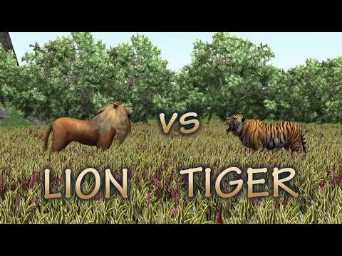Animal Race Lion vs tiger which is faster?